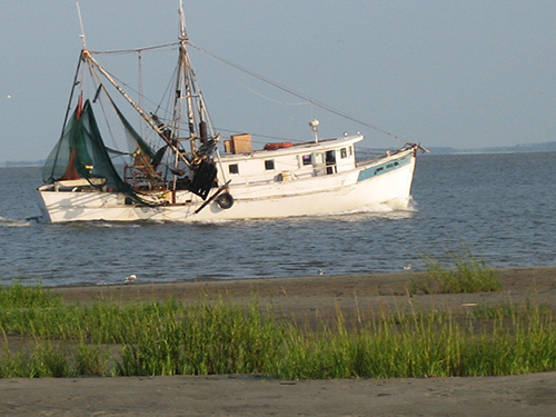 Palmetto Island Shrimp Boat